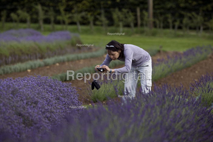 Tourists visiting a Lavender farm in the Cotswolds taking pictures of the clolorful plants. - John Harris - 2009-07-25