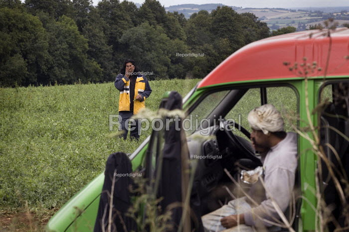 A chief gangmaster check the ripness of peas in a field on a farm in the Cotswalds - John Harris - 2009-08-05