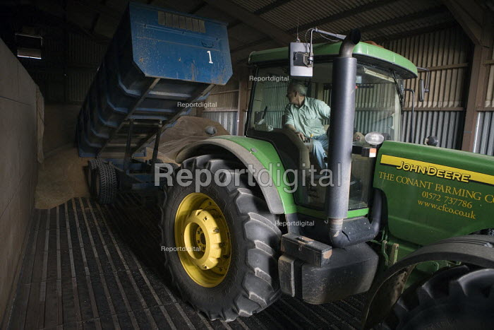 A tractor driver unloads the wheat into the grain store, Rutland - John Harris - 2009-08-21