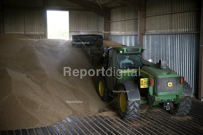 A tractor driver unloads the wheat into the grain store, Rutland. pushing the grain into a heap using a Telescopic handler. - John Harris - 2009-08-21