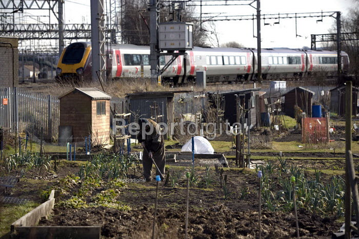 Elderly man tending his vegetable patch, hoeing weeds on an urban allotment as a train goes by. Stafford. - John Harris - 2010-03-16