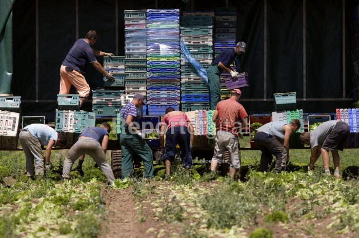 Migrant workers, lettuce production on a farm in Warwickshire - John Harris - 2010-06-28