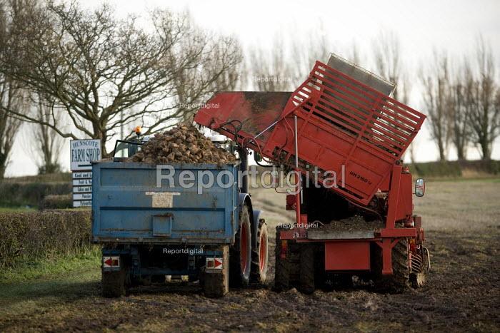 Harvesting Sugar beet, Warwickshire - John Harris - 2010-12-10