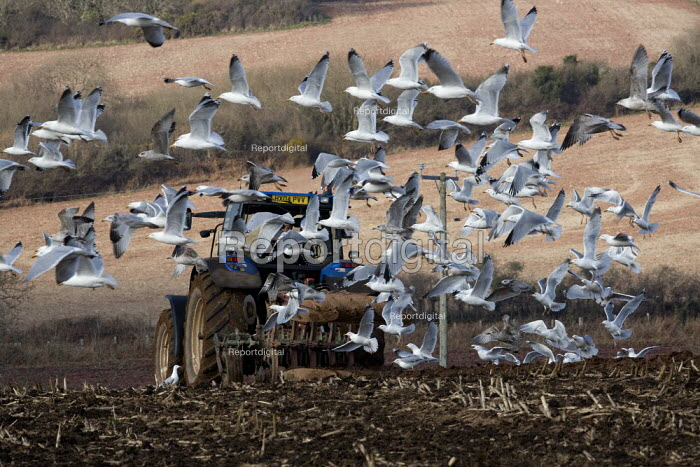 Ploughing, Pembrokeshire, Wales - John Harris - 2011-03-08