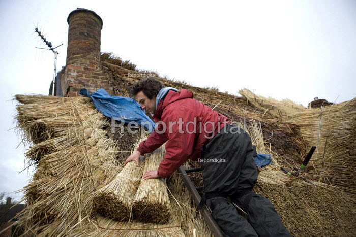Thatcher replacing the straw thatch of a thatched cottage in a Warwickshire village. - John Harris - 2012-01-26