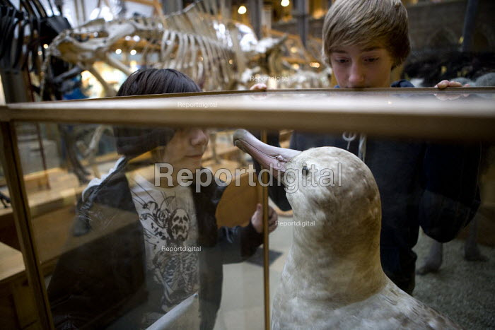 Children visiting, looking at a stuffed Dodo The Natural History Museum, Oxford. - John Harris - 2012-03-03