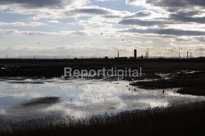 Waders on Frodsham Marsh, Runcorn, chemical works on the horizon - John Harris - 2013-03-12