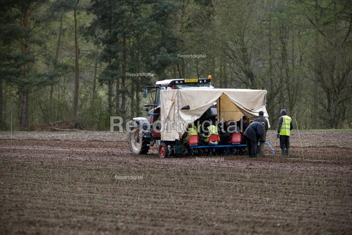 Planting rose rootstcks from a trailer rig, David Austin Roses Ltd, Shropshire - John Harris - 2012-04-11