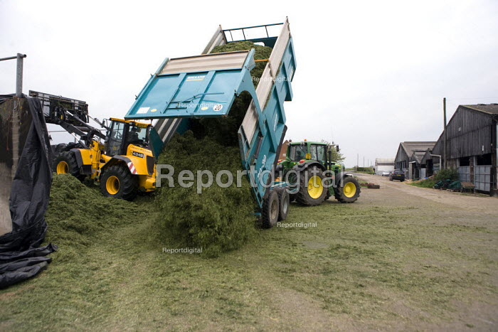 Silage making on a farm, unloading a tractor trailer of grass, filling and rolling the silage heap or clamp with a JCB wheeled loading shovel, Wormleighton, Warwickshire - John Harris - 2012-05-22
