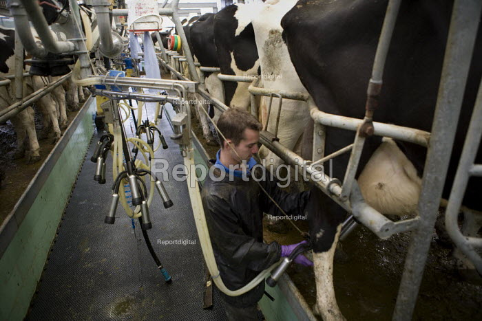 A young farmworker attaching the teatcups, milking cows in a dairy on a farm, Wormleighton, Warwickshire - John Harris - 2012-05-22