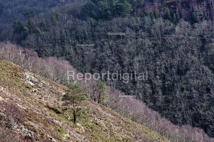 Whiddon Wood, Dartmoor, Devon - John Harris - 2014-02-25