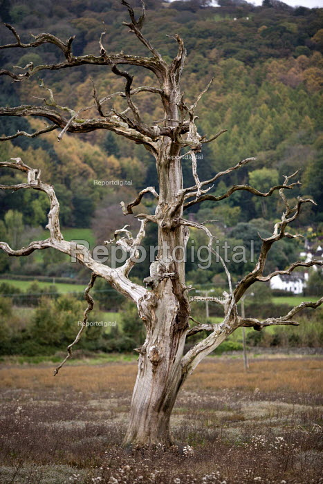 Dead tree, Saltmarsh, Porlock Bay, Somerset - John Harris - 2014-11-08