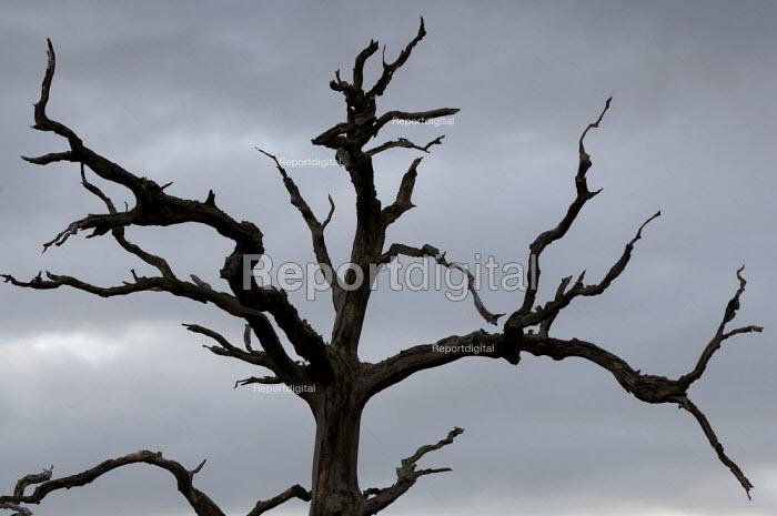 Dead tree, Saltmarsh, Porlock Bay, Somerset - John Harris - 2014-11-08