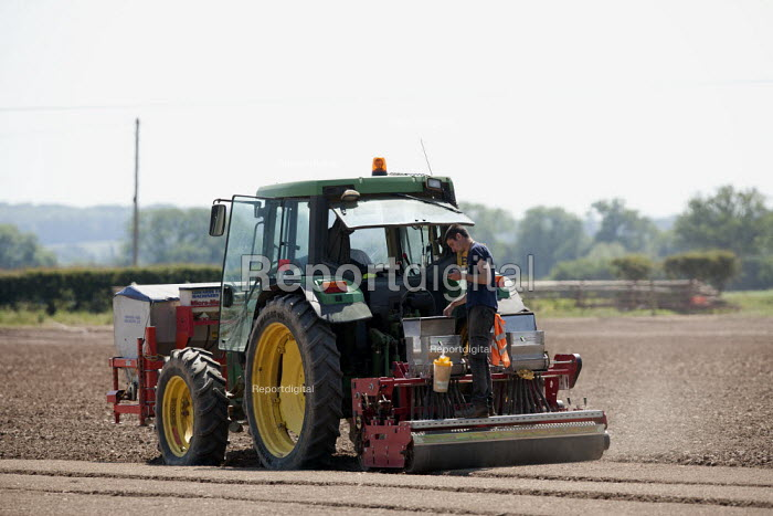 Seeding and rolling a salad bed, Warwickshire - John Harris - 2015-06-11
