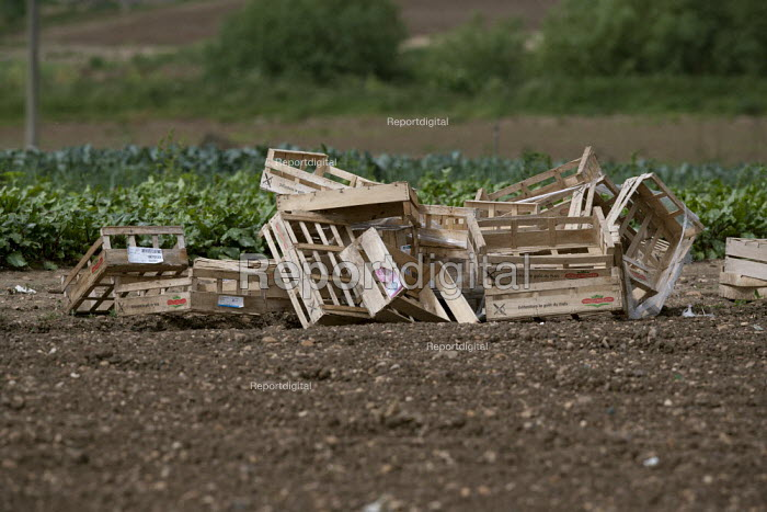 Wooden vegetable boxes for pickers in a field, Vale of Evesham, Worcestershire - John Harris - 2015-06-25