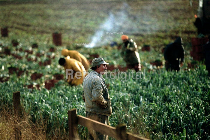 Gangmaster overseeing agricultural workers pulling and cutting leeks in a field on a farm in the Cotswolds. - John Harris - 2002-02-14