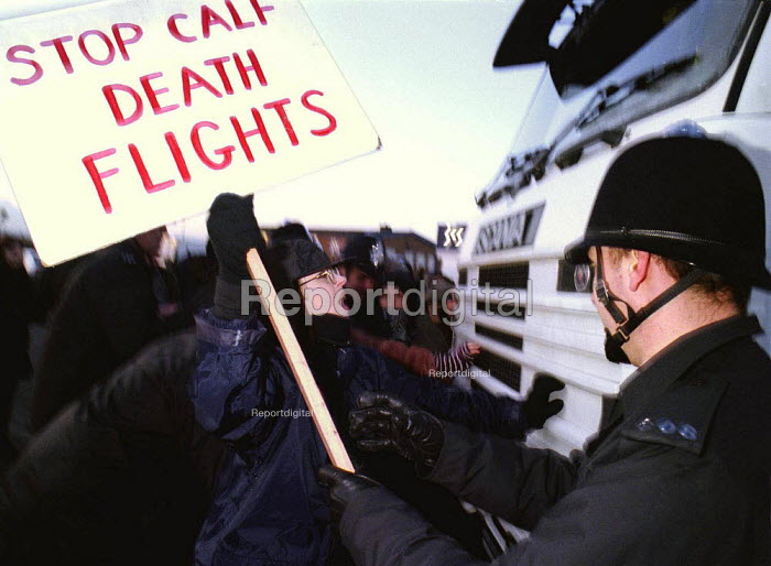 Animal rights protesters attempting to stop the export of live veal calfs from Coventry Airport - John Harris