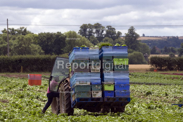 Tractor driver adjusting the load of harvested lettuce, in a field in Warwickshire - John Harris - 2011-07-27