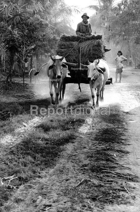 Cambodian farmer with cart drawn by cattle Cambodia. 1998 - Jim Holmes - 1998-07-03