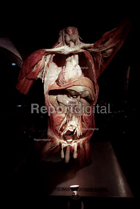 Torso of plastinated human body at the controversial Korperwelten art exhibition, by Prof. Gunther Von Hagens MD, Brussels, Belgium. - Jess Hurd - 2001-12-12
