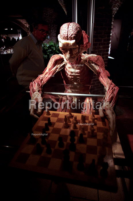 Whole human plastinated body with brain exposed plays chess at the controversial Korperwelten art exhibition, by Prof. Gunther Von Hagens MD, Brussels, Belgium. - Jess Hurd - 2001-12-12