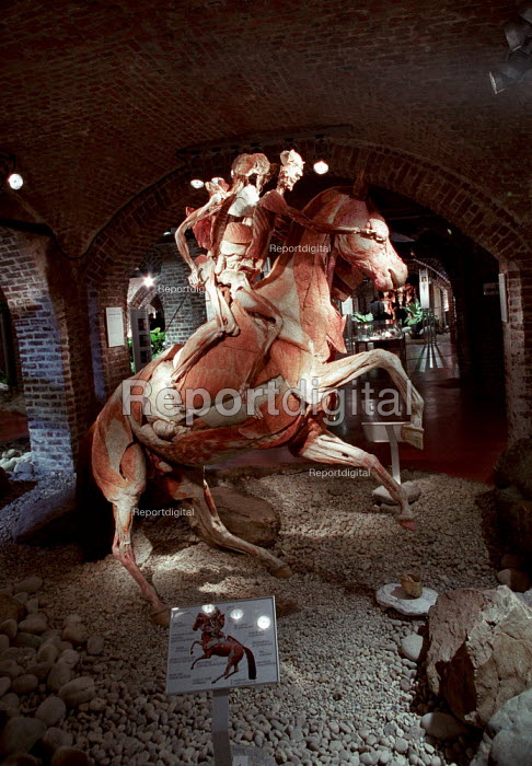 Rearing Horse and Rider. Plastinated whole bodies at the controversial Korperwelten art exhibition, by Prof. Gunther Von Hagens MD, Brussels, Belgium. - Jess Hurd - 2001-12-12