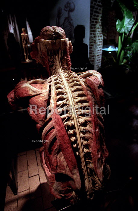 The Chess player. Whole human plastinated body with brain exposed plays chess at the controversial Korperwelten art exhibition, by Prof. Gunther Von Hagens MD, Brussels, Belgium. - Jess Hurd - 2001-12-12