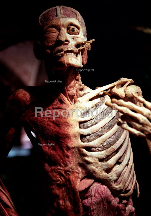 Whole Body Plastination of the Skeletal and Muscular System with Internal Organs. Smoker with blackened lungs, controversial Korperwelten art exhibition, by Prof. Gunther Von Hagens MD, Brussels, Belgium. - Jess Hurd - 2001-12-12