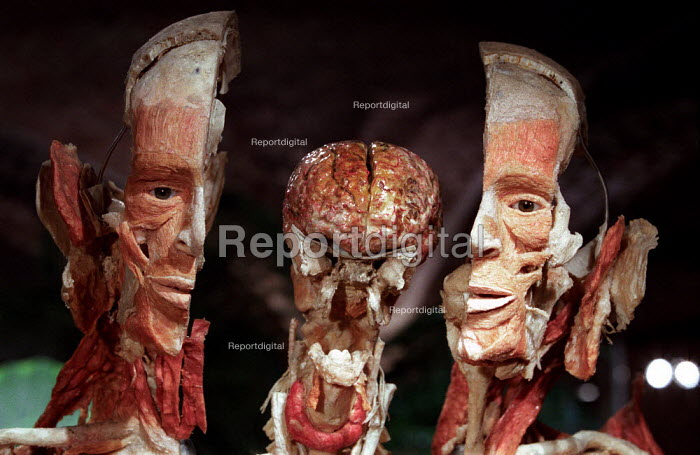 The Organ Man. Laterally exploded male body. Donated human plastinated body at the controversial Korperwelten art exhibition, Brussels, Belgium. - Jess Hurd - 2001-12-12