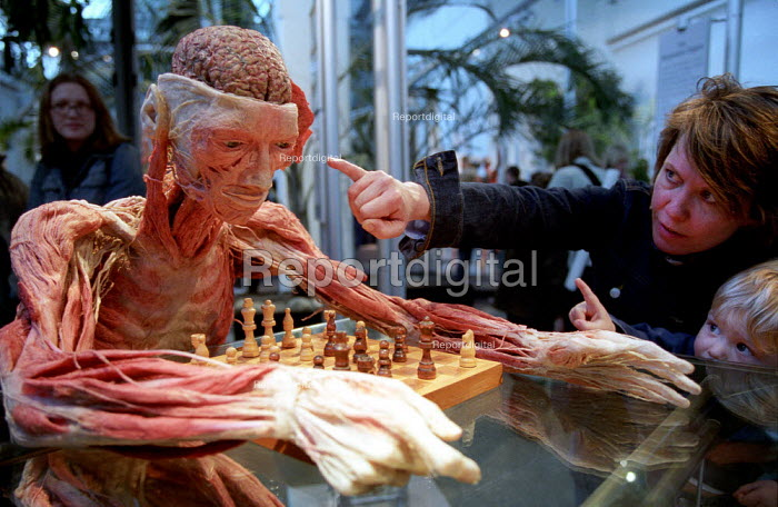 The Chess Player with mother and small child. Whole Plastination with dissection of the central and peripheral nervous systems. Donated human plastinated body at Gunther Von Hagens controversial Body Worlds art exhibition, Atlantis Gallery, East London. - Jess Hurd - 2002-03-28