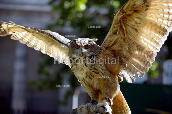 European Eagle Owl. Rescued bird of prey with its handlers at Euston Station. London. - Jess Hurd - 2003-08-02