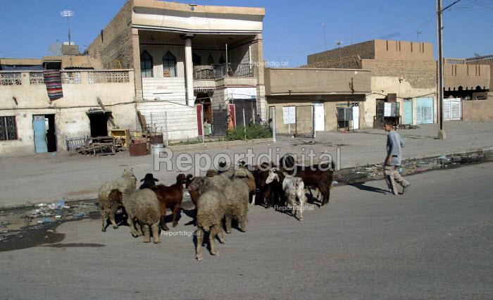 Sadr City. Baghdad, Iraq. - Jess Hurd - 2003-10-05