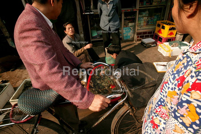 People shop for crabs in the Old Town Ghost Market, Shanghai, China. - Jess Hurd - 2003-10-26