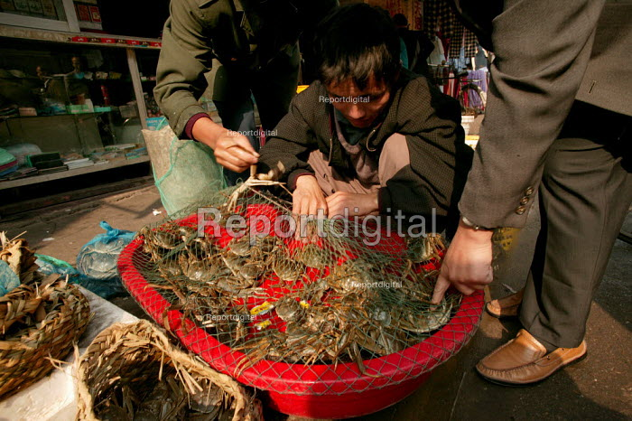 Young Chinese street vendor sells crabs. Old Town Ghost Market, Shanghai, China. - Jess Hurd - 2003-10-26