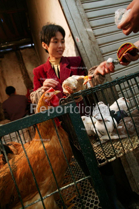 Chinese sells a chicken. Old Town Ghost Market, Shanghai, China. - Jess Hurd - 2003-10-26