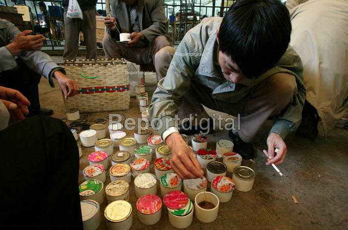 Chinese man examines his beetles. Old Town Insect Market, Shanghai, China. - Jess Hurd - 2003-10-26