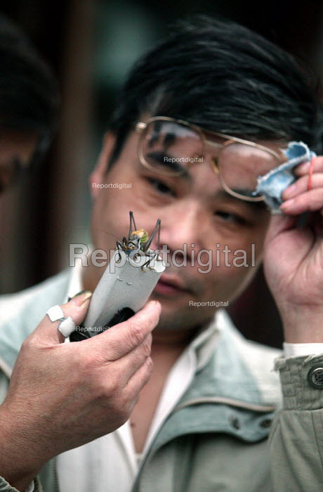 Chinese man examines his Cricket. Old Town Insect Market, Shanghai, China. - Jess Hurd - 2003-10-26