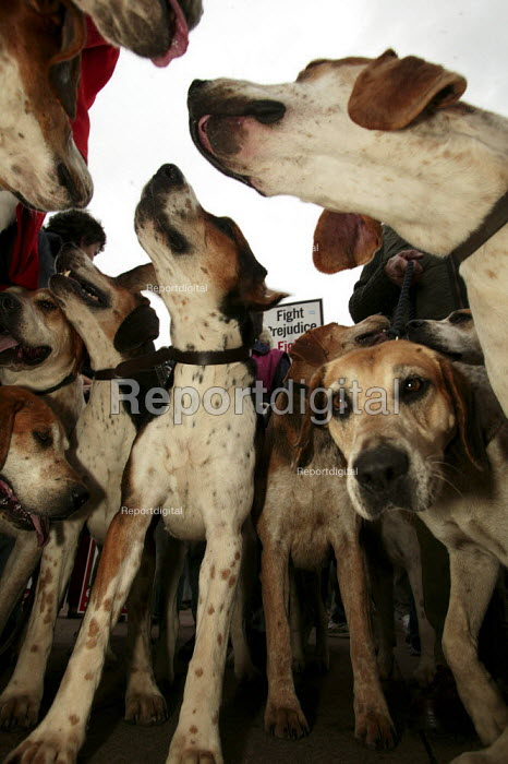 Countryside Alliance pro hunting rally with a pack of hound dogs. Labour Party Conference, Brighton. - Jess Hurd - 2004-09-28