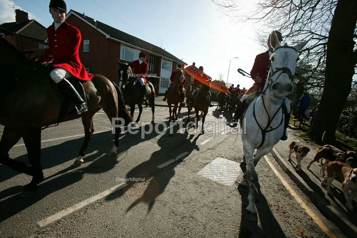 Belvoir, Cottesmore, Oakley Foot Beagles and Quorn fox hunts meet in Melton Mowbray for the first time after the ban on hunting with dogs. Leicestershire. - Jess Hurd - 2005-02-19