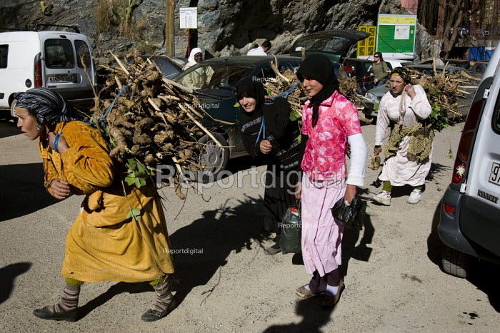 Berber women carry heavy loads of wood in the village of Ourika in the Atlas Mountains, Morocco. - Jess Hurd - 2008-01-12