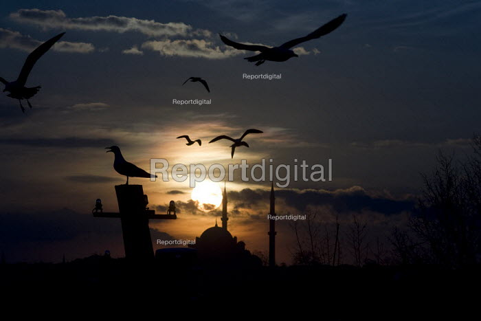 Istanbul sunset over Sultan Ahmed Mosque, with seaguls from the bank of the Golden Horn, Istanbul, Turkey. - Jess Hurd - 2008-03-12