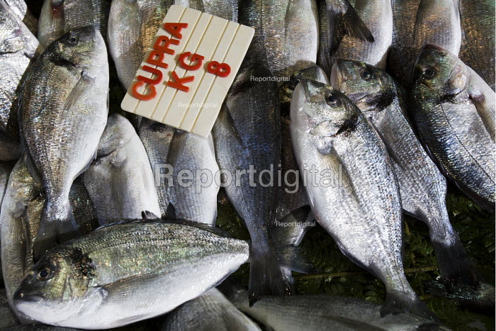 Cupra fish for sale in the fish market. Istanbul, Turkey. - Jess Hurd - 2008-03-10