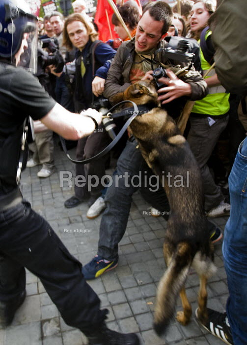 Photographer is attacked by a police dog. English Defence League march in Manchester countered by Unite Against Fascism. - Jess Hurd - 2009-10-10