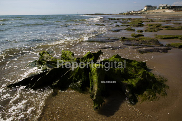 Tywyn beach, where storms revealed a Bronze age petrified forest, and 6,000 year old ancient peat beds. Powys, Wales. - Jess Hurd - 2014-06-18