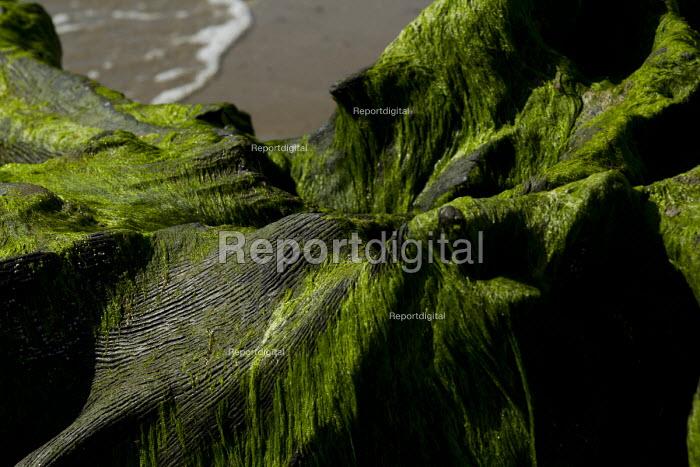 Tywyn beach, where storms revealed a Bronze age petrified forest, Powys, Wales. - Jess Hurd - 2014-06-18