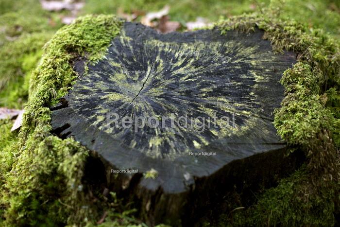Tree stump with moss. Dolgoch Falls. Snowdonia National Park. Wales. - Jess Hurd - 2014-10-26