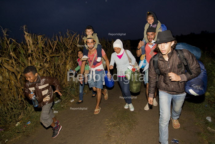 Refugees run through corn fields to the Tovarnik, Croatia border crossing. Serbia. - Jess Hurd - 2015-09-20