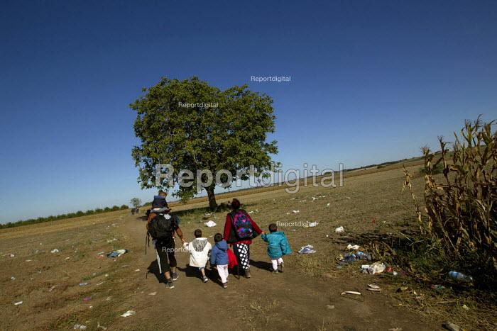 Family of four refugees make their way through corn fields towards the Tovarnik, Croatia border crossing. Serbia. - Jess Hurd - 2015-09-21