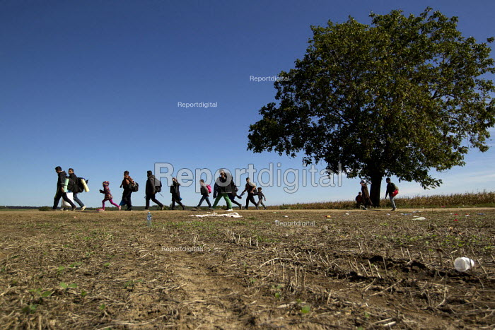 Refugees run through corn fields towards the Tovarnik, Croatia border crossing. Serbia. - Jess Hurd - 2015-09-21