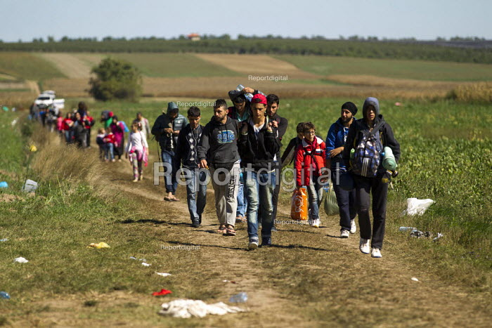 Refugees walking through fields towards the Tovarnik, Croatia border crossing. Serbia. - Jess Hurd - 2015-09-21